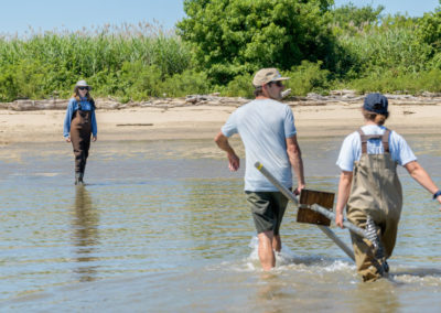 Rachel Schaefer explores how vegetation can reduce erosion of Delaware River island