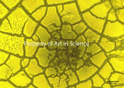 Neighborhood of Nanoparticles