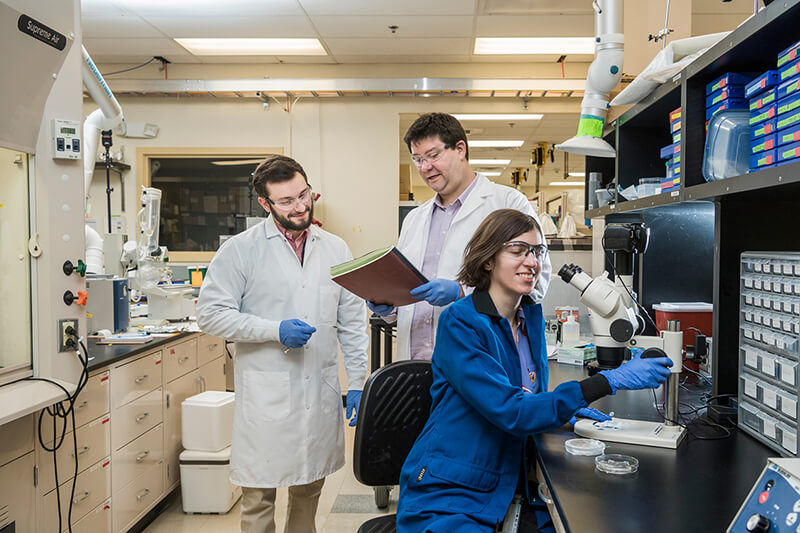 The College of Engineering's Jason Gleghorn, Biomechanical Engineering, has received a NSF Career Award for his work with lymph nodes and their ability to fight off infections. Jasmine Shirazi and Michael Donzanti are part of the Gleghorn group doing research.